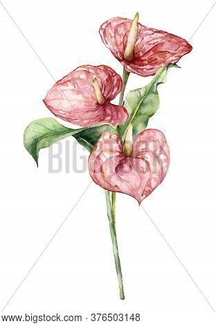 Watercolor Bouquet With Anthurium And Leaves. Hand Painted Floral Composition With Flowers And Stems