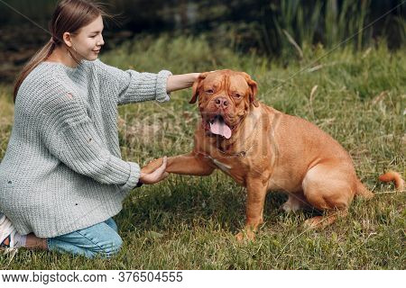 Dogue De Bordeaux Or French Mastiff Gives Paw Young Woman At Outdoor Park