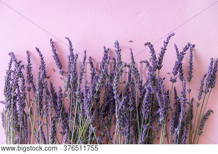 Dry Lavender Flower Bouquet On Violet Paper Background