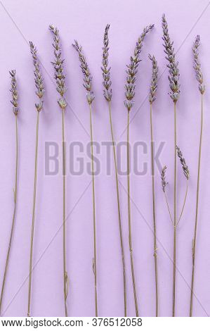 Lavender Pattern. Purple Flowers Viewed From Above On A Violet Background. Top View
