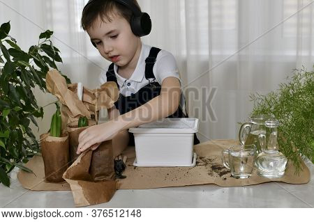 The Boy Is Engaged In The Planting Of Hyacinths. Carefully Palms Unwrap Paper Containers With Bulbou