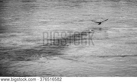High Angle Shot Of A Bird Flying Over A Lake In A Rainy Weather