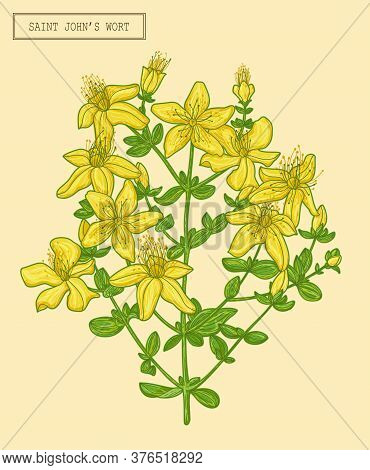 Medical Saint Johns Wort Blooming Branch, Hand Drawn Botanical Illustration In A Trendy Modern Style