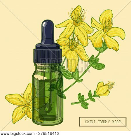Blooming Saint Johns Wort Plant And Green Glass Dropper, Hand Drawn Botanical Illustration In A Tren