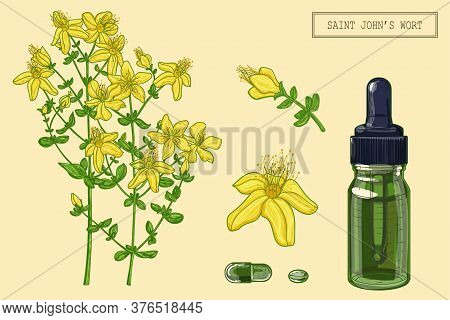 Medical Saint Johns Wort Plant And Dropper, Hand Drawn Botanical Illustration In A Trendy Modern Sty
