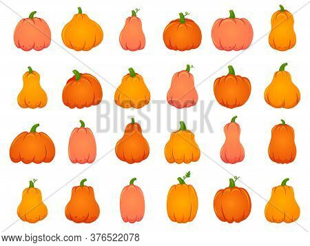 Halloween Fall Pumpkins. Cartoon Traditional Decoration, Holiday Orange Pumpkin, October Halloween H