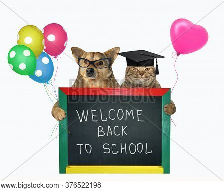 The Beige Cat In A Square Academic Cap And The Dog In Glasses Are Holding Colored Balloons And A Sma