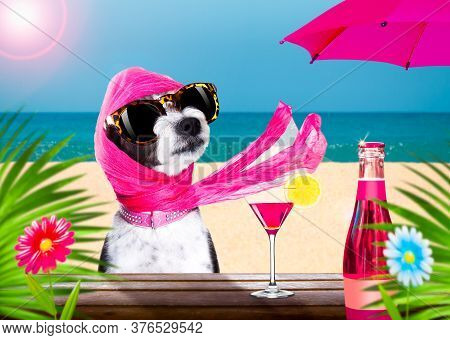 Lady Diva Poodle Dog  With Sunglasses In Summer Vacation Holidays   With  Cocktail Drink Or Beverage