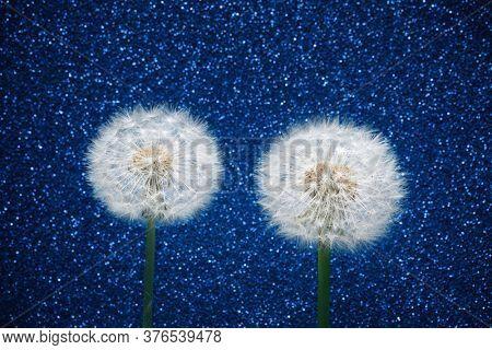 two dandelion flowers on blue glitter background