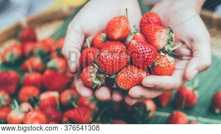 He Collected Strawberry Products. Sweet Red Strawberry. Strawberry Farm Box With Ripe Berry. Manual