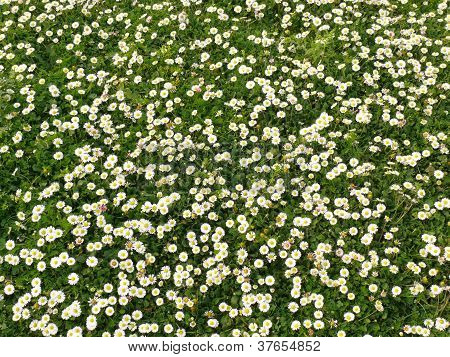 Daisies and grass in the sunlight