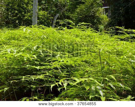 Young ferns in the sunlight with dark background