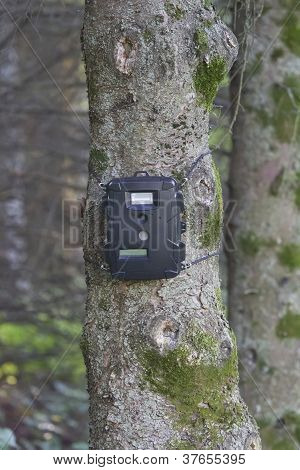 Black Trail Cam On Pine Tree For Deer Hunting
