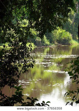 View on a lake through shrubery