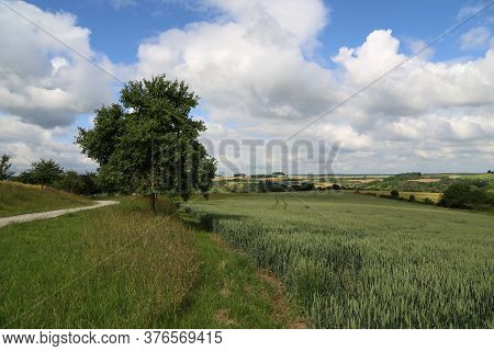 Summer Landscape With Green Pricking Wheat Field