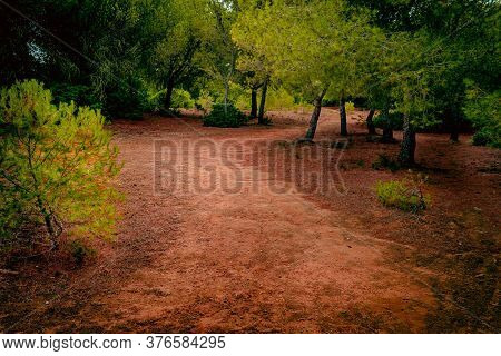 Fantastic Brown And Green On A Lighted Forest Path