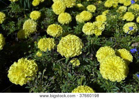 pretty florets