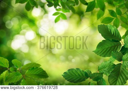 Green Foliage Framing A Beautiful Bokeh Nature Background With The Shimmering Leaves As Bright Highl
