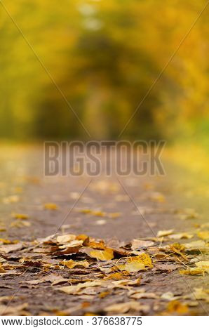 Beautiful Orange And Red Autumn Forest. Autumn Road With Fall Foliage Trees