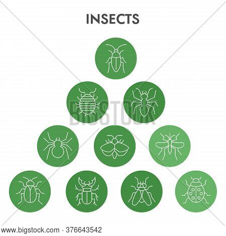 Modern Insects Infographic Design Template. Pest Control Infographic Visualization In Bubble Design