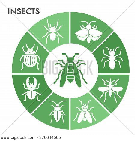 Modern Insects Infographic Design Template. Bugs And Beetles Infographic Visualization In Bubble Des