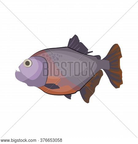 South American Piranha. Freshwater Predatory Fish. Can Be Used For Topics Like Carnivore, Aquarium,