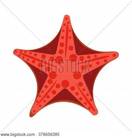 Bright Red Starfish Illustration. Mollusc, Ocean, Seafood. Nature Concept. Illustration Can Be Used