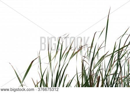 Wild Grass With Leaves Growing In A Field On White Isolated Background For Green Foliage Backdrop