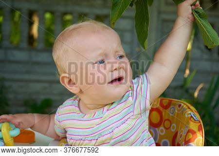Baby Crying In A Walker, Saddened Baby In A Walker Crying In The Yard