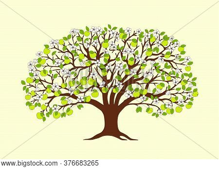Cartoon Apple Tree With Green Apples, Flowers And Leaves Isolated On The White Background.  Cartoon