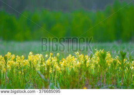 closeup image of yellow wildflowers