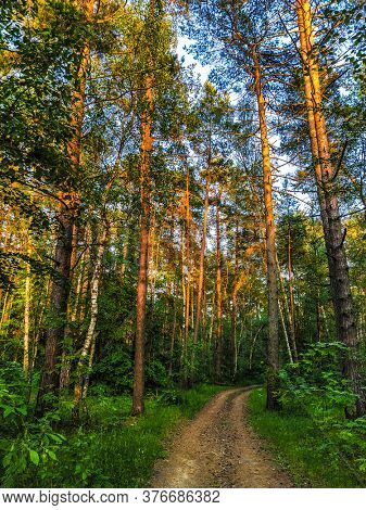image of a country road in a forest
