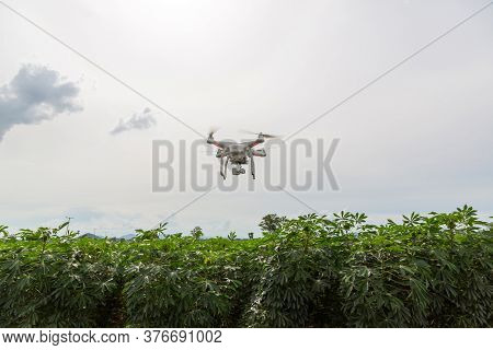 Drone Flying Over A Meadow. Drone On Green Cassava  Field. Drone Copter Flying With High Resolution