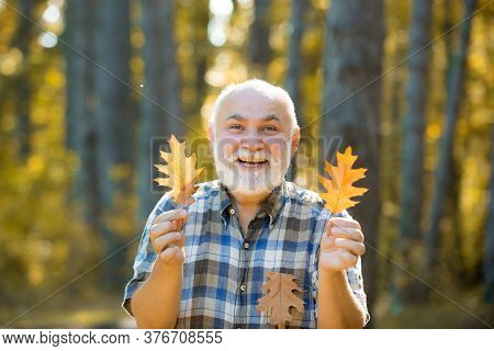 Portrait Of Happy Senior Man In The Park In Autumn. Portrait Of Senior Man In The Autumn Park. Golde