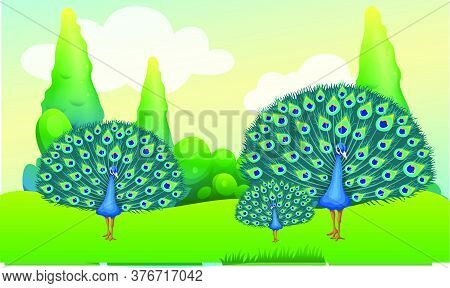 Peacock Family Is Dancing In The Garden
