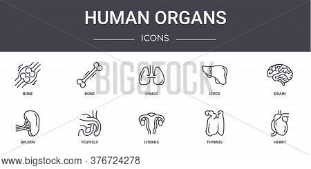 Human Organs Concept Line Icons Set. Contains Icons Usable For Web, Logo, Ui Ux Such As Bone, Liver,