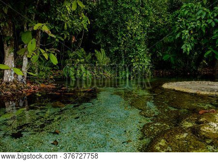 Tropical Jungles Of Southeast Asia In Winter, Thailand