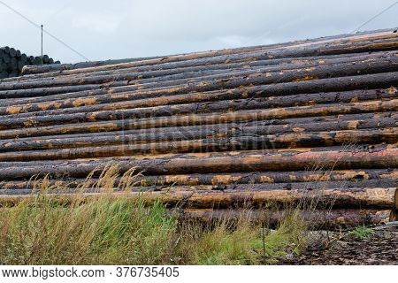 Wood Yard Business. Wood Stacked Outdoors. Concept Forest Industry Environment. Felled Tree Trunks A