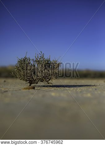 Solitary Tree On Dry Desertic Soil With Cracks Blurred With Copy Space
