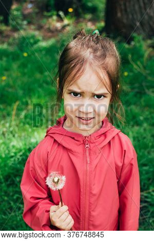 Cute Upset Angry Toddler Little Girl In Pink Jacket Holding Dandelion Flower In Hands Over Green Bac