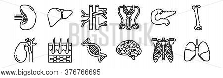 Set Of 12 Thin Outline Icons Such As Lungs, Brain, Skin, Pancreas, Veins, Liver For Web, Mobile
