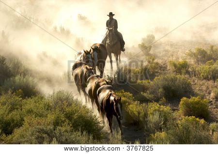 Cowboy Guiding Horses