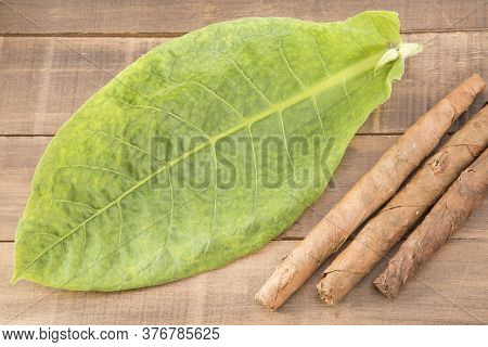 Tobacco Leaves And Tobacco - Nicotiana Tabacum