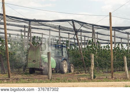 A Red Tractor Fertilize Between Fruit Trees. Agricultural Machines Operate In The Spring Field Seaso