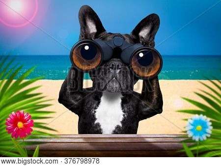 French Bulldog  Dog   Binoculars Searching, Looking And Observing With Care, Behind Bushes