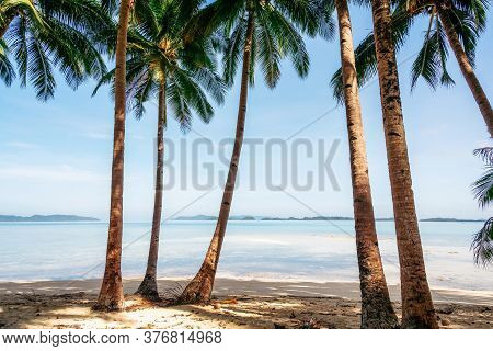 Jungle With Palm Trees On Coconut Beach In Port Barton, Palawan, Philippines