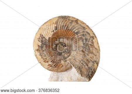 Close Up Of An Ammonite Fossil Isolated On A White Background