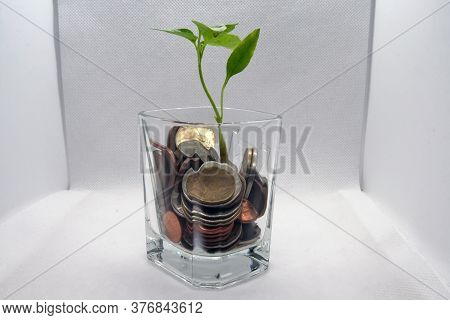 Plant Growing In A Glass With A Coins. Growing Business.