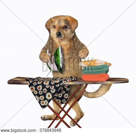 The Beige Dog Housewife Is Ironing Clothes Using An Iron On An Ironing Board After Laundry At Home.