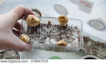 .medical Research On Psilocybin. Legalization Of Psilocybin Mushrooms In America